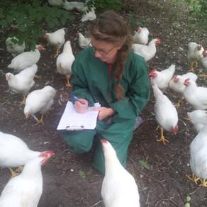 Erst Huhn oder Ei? Jetzt Fleisch und Ei! - Abschlussworkshop im Projekt Ökohuhn