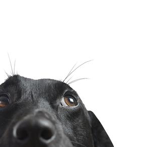 Amigos dos Animais | Dierenvrienden