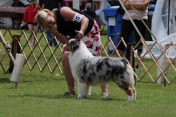 Australian Shepherd - Blue Merle - Ausable River Aussies - Emily Burdon - Dog Show - Ontario