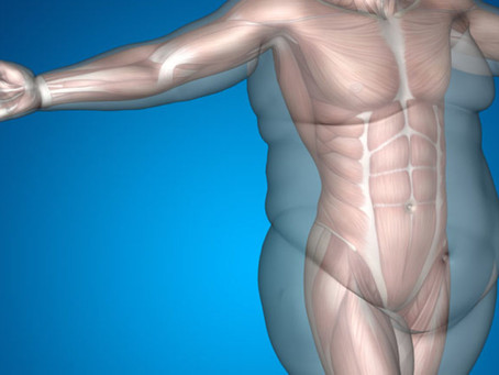 How Fat is Stored in Our Bodies