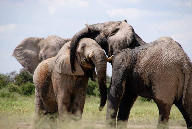 South Africa Safari.jpeg