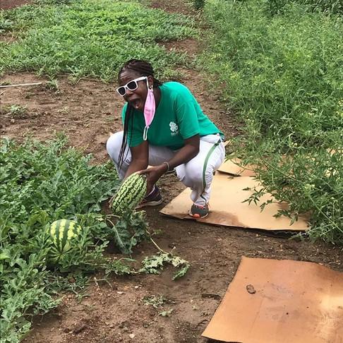 Urban Gardening in Bush Hills