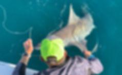Shark Fishing Florida .jpg