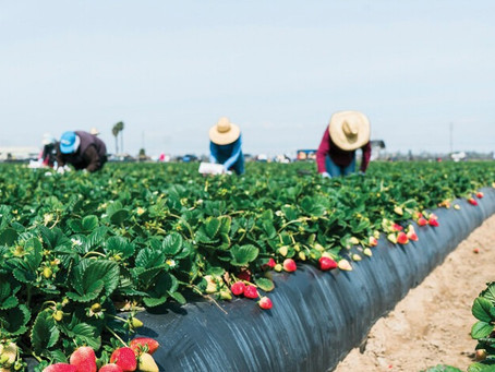 Temporary rule to help H-2A employers find farm workers