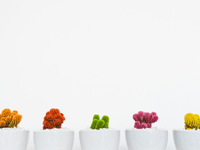 Growing Your Employees & Your Cacti
