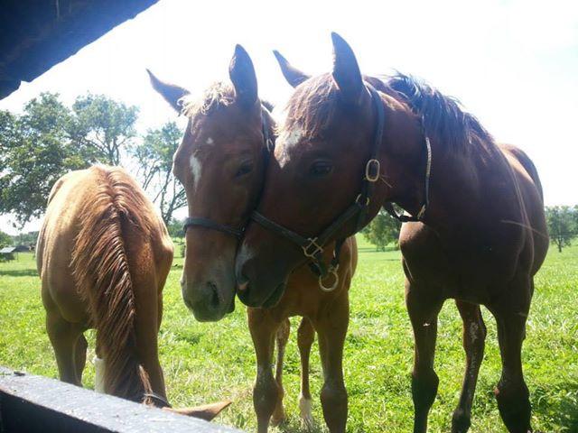 Denman's Call Gr.1 winner Taylor Made Farm as a foal