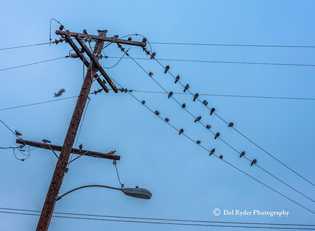 Pidgeons on a Pole
