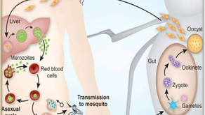 Let's Scratch the Surface of Malaria