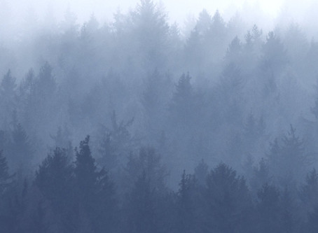 Forest and Fog Is Born