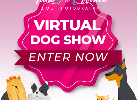Tails of Wales Virtual Dog Show!