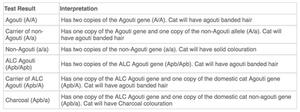 Kočka bengálská genetický test – ALC agouti