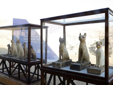 Новые котики из Саккары