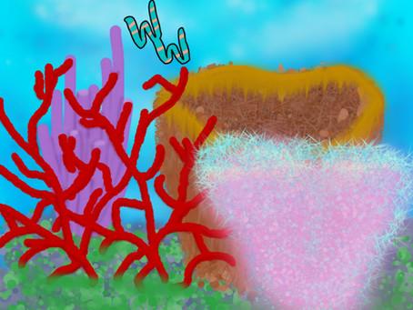 Sea Sponges!