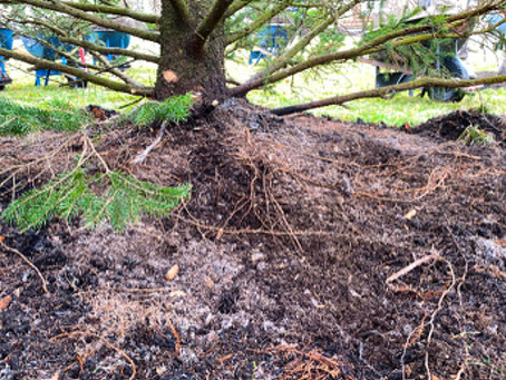 Mulching 101 & Common Myths