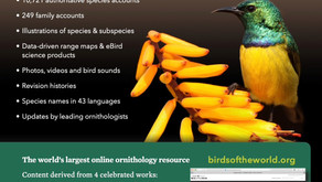 Get a year subscription of the Birds of the World website at a discount
