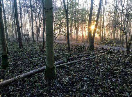 Tree felling in Westgate Wood