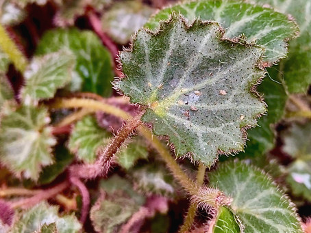 Scale & Mealybug Insects