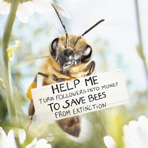 The World's First Bee Influencer Is Raising Funds to Save Her Species