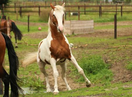 Mijn paard luistert niet! Maar luister jij wel?