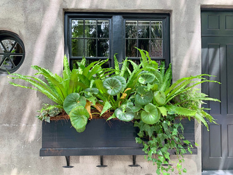 The Window Boxes of Charleston