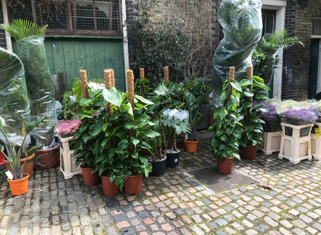 Peacock Yard, home of Can of Worms, getting its own rainforest.