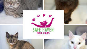 SAFE Haven for Cats - For cats. For life.