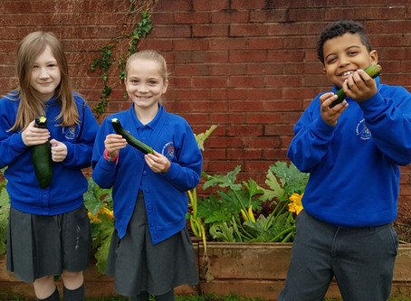 Year 4 courgette success!