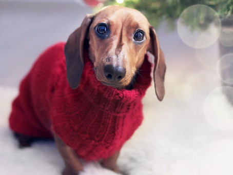 Easy Ways to Keep Your Dog Warm this Winter