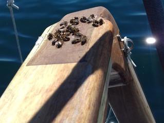 Bee Offshore !!