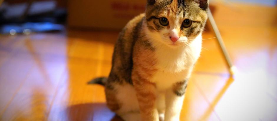 〈手と場〉に猫がやってきました
