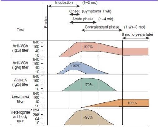 Титр антител при ВЭБ (вирус Эпштейна-Барр): VCA, EBNA, EA