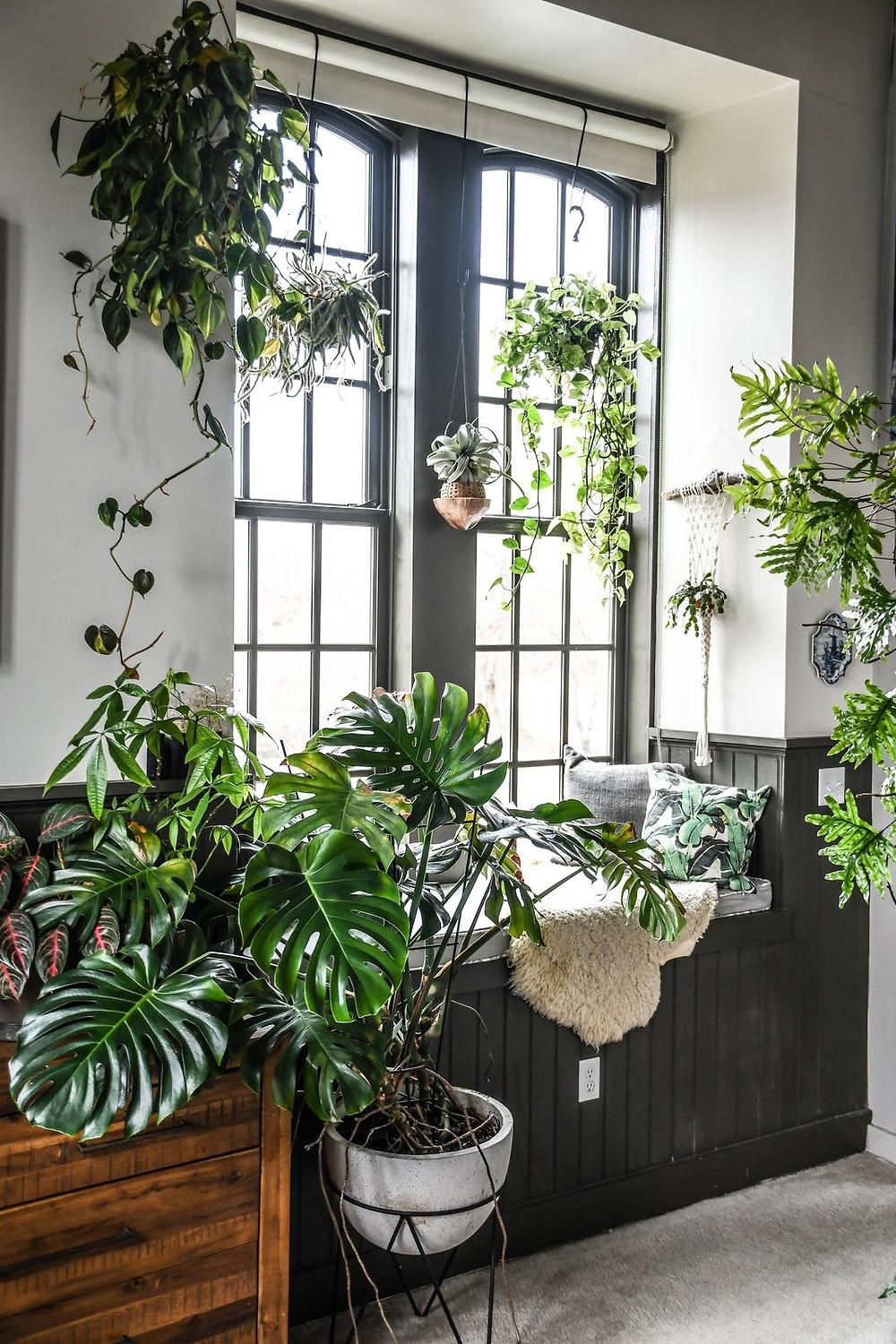 Large sun-filled spaced with house plants.