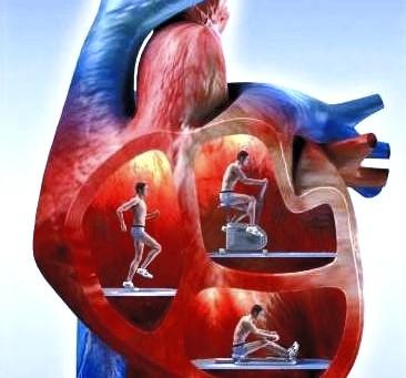Améliorer la santé de votre coeur et de vos articulations : levez-vous!