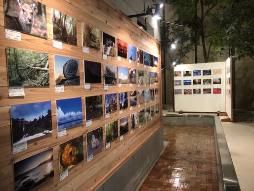 屋久杉自然観写真展が開催されています!