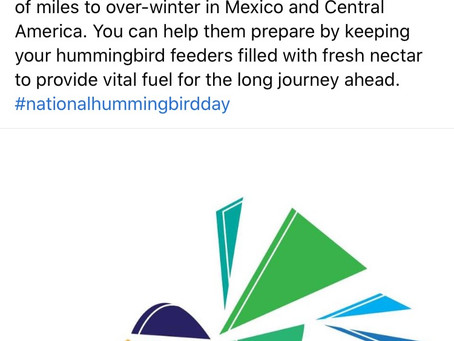 National Humming Bird Day
