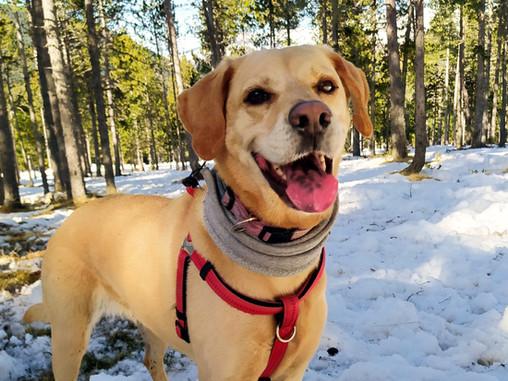 Ohana - Equipo animal de la Intervención Asistida con Perros