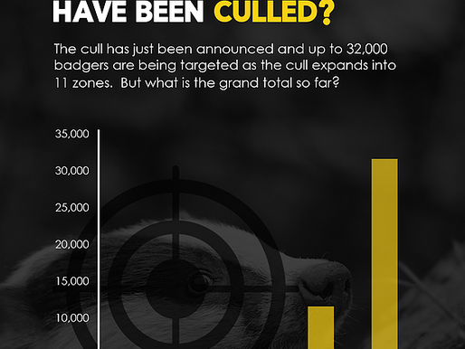 Your money is paying for over 30,000 badgers to be killed.....