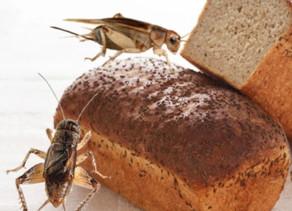 """""""Pão feito com insetos comestíveis"""". Você comeria?"""