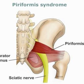 The Piriformis Muscle