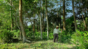 Man Dedicates his Life to own a Forest by planting Trees every Day !  📽