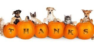 "cats and dogs aurrounding pumpkins that are carved to spell out ""thanks"""