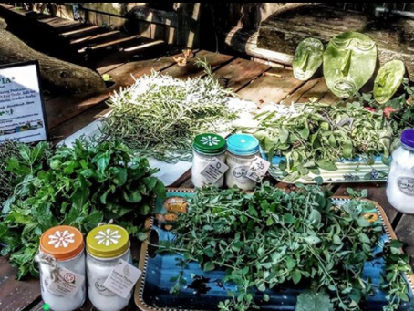 Echotopia is garden-based. We grow, harvest, dry, grind and use our herbs as cleaning ingredients!