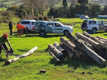 Firewood for whānau plan clears wood left from lockdown