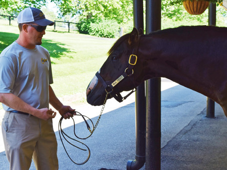 Horse Country Re-Opens For Visitors