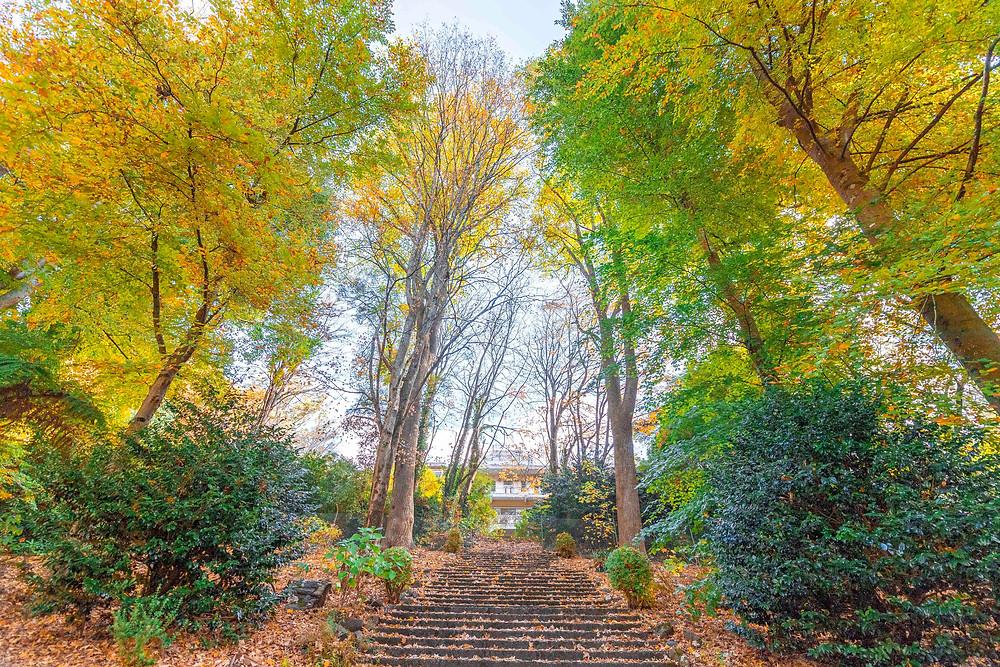 Alfred Nicolas Gardens