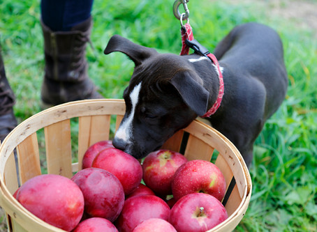 5 dog friendly healthy and easy snacks.
