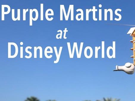 AGD 7 - Purple Martins at Disney World