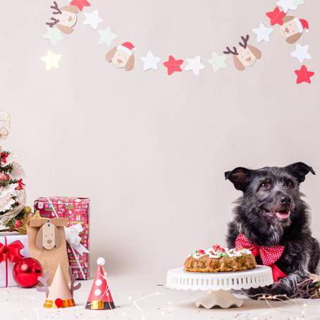 Canastas navideñas para perros y gatos en Happy Pets