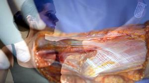 fasciathérapie 44 ; fasciathérapie saint nazaire ; fasciathérapie ; fasciathérapie formation ; fasciathérapie avis ; fasciathérapie nantes ; fasciathérapie remboursement ; fasciathérapie et depression ; fasciathérapie exercices ; fasciathérapeute 44 ; fasciathérapeute saint nazaire ; fasciathérapie et depression ; kine fasciatherapeute ; kinésithérapeute fasciathérapeute ; kine fasciatherapeute nantes ; kinésithérapeute fasciathérapeute nantes ; qu'est ce que la fasciathérapie ; fasciathérapie et fibromyalgie ; fasciathérapeute ; fasciathérapie avis ; formation fasciathérapie ; fasciathérapie nantes ; fasciathérapeutes ; fasciathérapie et depression ; fasciathérapeute 44 ; fasciathérapeute saint nazaire ; fasciathérapie saint nazaire ; fasciathérapeute loire atlantique ; fasciathérapie loire atlantique