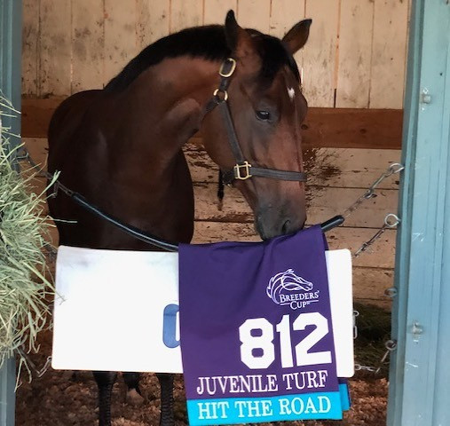 2019 Breeders' Cup Juvenile Turf contender Hit The Road